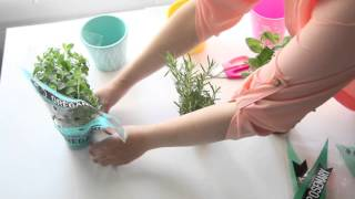 5 Tips - How To Plant Herbs Indoors [DIY, Mintedplum]