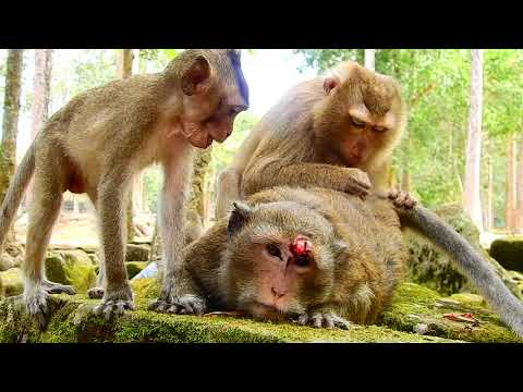 Xxx Mp4 Poor Mum Baby Very Worry Mum Cos Break Head Adult Care Mum While Injure Better Soon Mum 3gp Sex