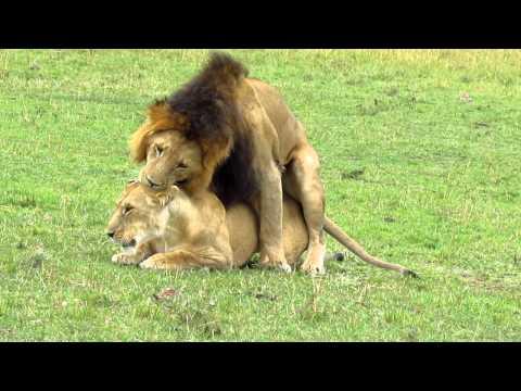 Xxx Mp4 Lion Sex 3gp Sex