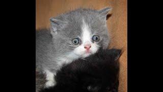 Gatos apareandose impresionantes Imagenes