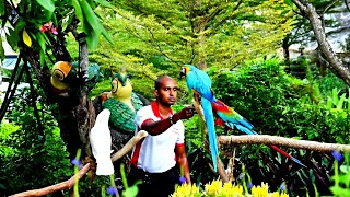 Colorful Parrots from Amazon Jungle of Birds.