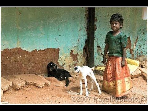 South India (Tamil Nadu and Kerala) Part 1