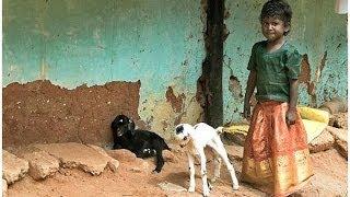 South India - Part 1: Tamil Nadu
