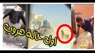 هروب خروف العيد ~ احلى المقاطع المضحكه