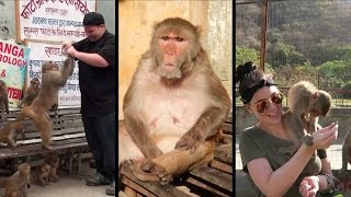 Incredible India | Foreigners Reaction On Monkey | Funny Compilation