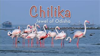Chilika   Jewel Of Odisha HD