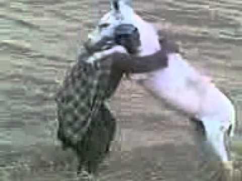Man vs. Donkey.3gp