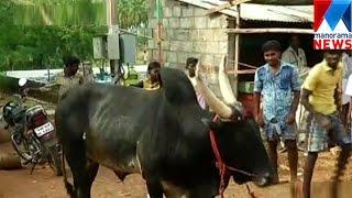 Jallikkatt - bill today  | Manorama News