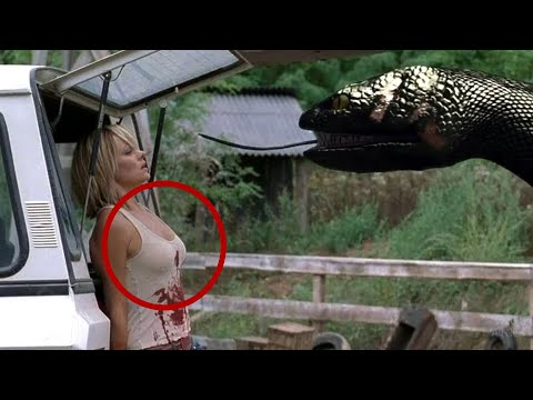SafariVideos Anaconda Attack Man