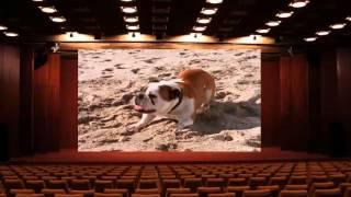 Son Of The Beach S02E04 Rod Strikes Back DVDrip H264 AAC PRiNCE