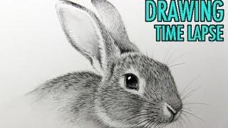 Drawing Time Lapse: Rabbit