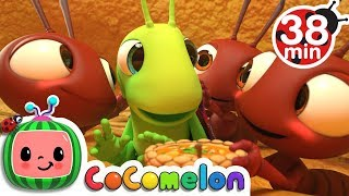 The Ant and the Grasshopper | +More Nursery Rhymes & Kids Songs - CoCoMelon