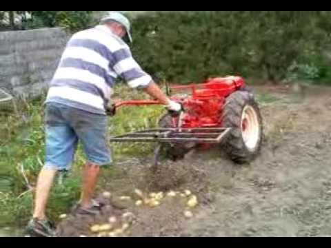 arrache pomme de terre