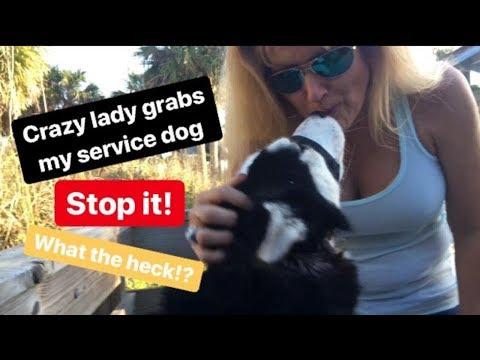 Xxx Mp4 Crazy Lady Grabs My Service Dog Vlog Feb 18 3gp Sex
