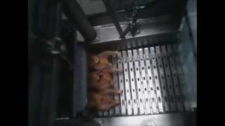 inyeccion de pollo - chicken injection
