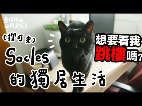 黃阿瑪的後宮生活-Socles的獨居生活(黑貓的日常)