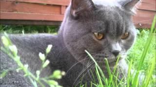 kot w ogrodzie zdjecia
