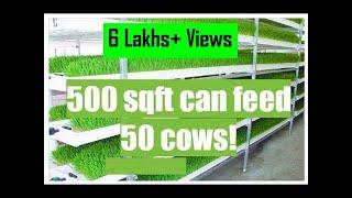 Dairy Farming 02 - Hydroponic Fodder (Hindi subtitles)