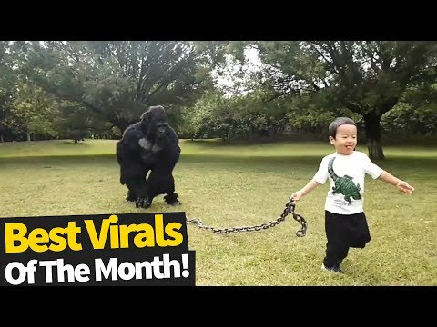 Top 60 Viral Videos Of The Month October 2019