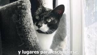 Cómo hacer que dos gatos se lleven bien (VOS)