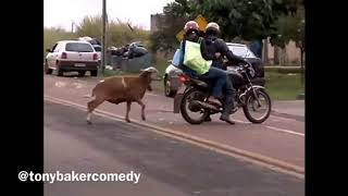 CRAM Ram - Tony Baker (comedian)