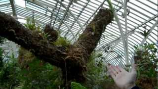 Botanic Gardens Dublin Ireland