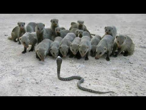 Funny  Snake VS Baba Comedy Video