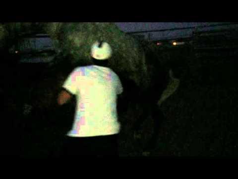 Xxx Mp4 Lady Gabino Horse Mating 3gp Sex