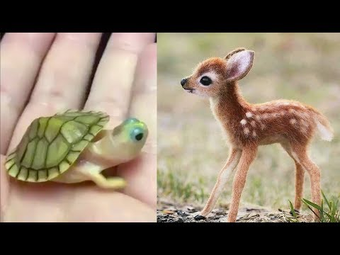 Cute baby animals Videos Compilation cute moment of the animals Cutest Animals 3