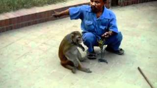 Play with Monkey (Banorer Badrami)
