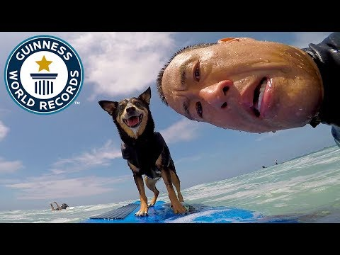 Xxx Mp4 Abbie Girl Longest Wave Surfed By A Dog Meet The Record Breakers 3gp Sex