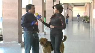 Maravillas del Mundo Animal: Conociendo al Airedale Terrier