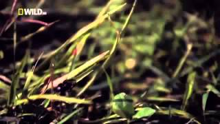 National Geographic   Super Spider Documentary
