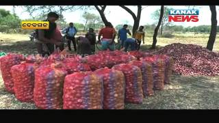 Odisha Minister Pooh-Poohs Onion Distress Sale