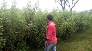 সাধু যখন চিপায় @  জংগলে