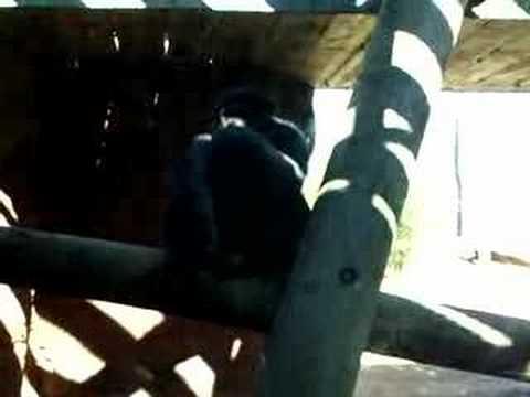 Dirty Monkey Business Funny XXX