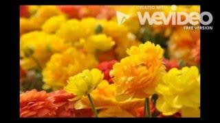 Watch a video of a beautiful flowerসুন্দর একটি ফুলের ভিডিও দেখুন