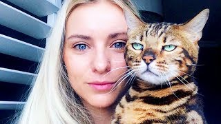 Cats Didn't Want To Be In Your Stupid Selfies And The Result Was Hilarious 「 funny photos 」