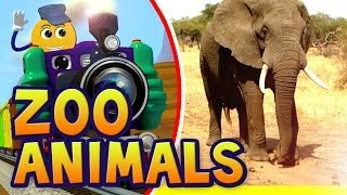 Zoo Animals for Children | Kids Learn Spelling in English | PicTrain™