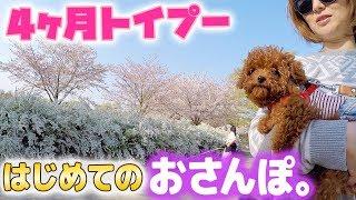 【トイプードル】ピノが初めてのおさんぽで公園デビュー!アロマと双子コーデ