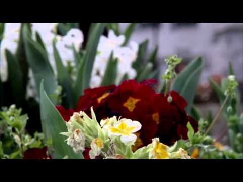 London's Spring's Flowers & Blooms Part 1
