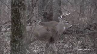 Hunting Iowa White-tail Deer with an HD Camcorder