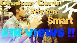 images Dhakar Goru Very Very SMART Ultra GrupzZ Eid Song 2016