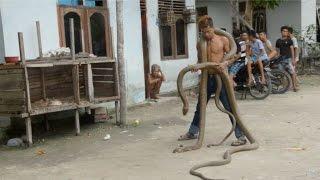 Snake Charmer Walks With King Cobra Around Neck