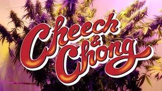 Cheech e Chong Queimando Td dublado