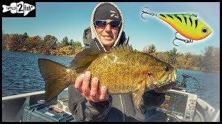 Lipless Crankbaits Excel for Fall Bass in Rivers