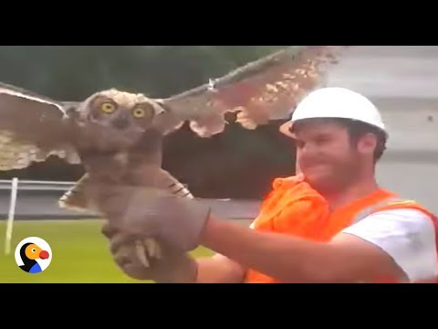 Xxx Mp4 Owl Tangled In Net Rescued By Kind Strangers The Dodo 3gp Sex