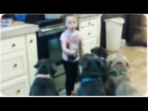 Little Girl Controls Pit Bull Dogs | Future Dog Trainer