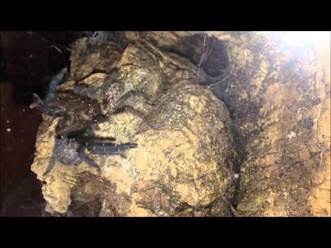 Xxx Mp4 Tarantula Sex Video 3gp Sex