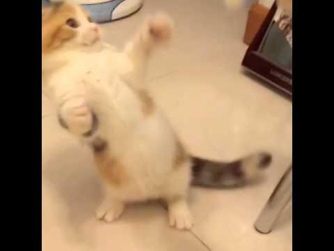 曼基貓仔玩紙巾